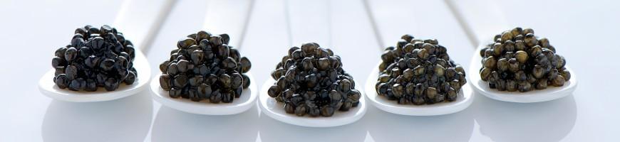 Caviar Bibial